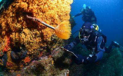 Les plus belles plongées de méditerranée